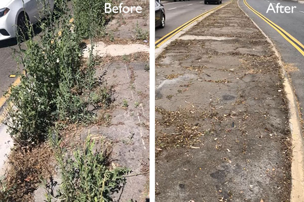 Before and after images of weed removal from Pacific Beach median. Please volunteer to help!